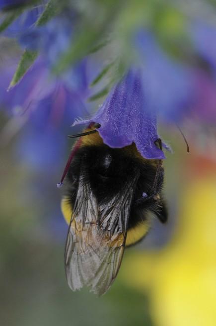 35 millions d'enregistrements sur la faune et la flore, sur les habitats, les espaces naturels… la base de l'INPN est d'une grande richesse. Mais elle n'est pas encore réellement en open data. (© Elodie Gaillard pour iStock)