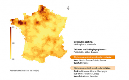 Les fibrobactères dans les sols en France