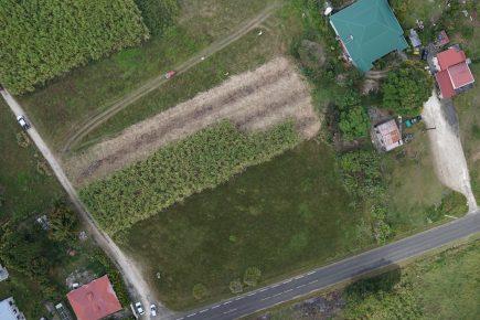 Récolte de canne à sucre en cours