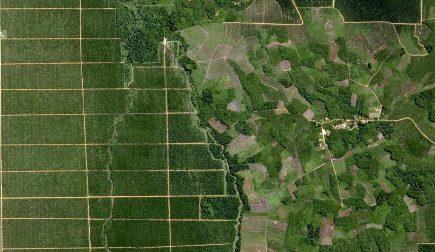 Une image SPOT 6 de plantations de palmiers à huile (document Airbus)